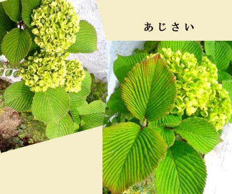 blog-0430a.jpg