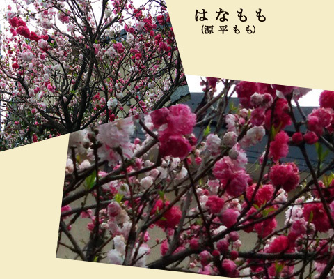 blog-0430d.jpg