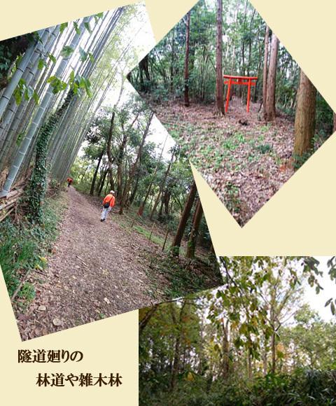 blog-1114e.jpg