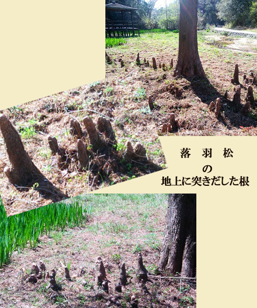 blog-19A20z.jpg