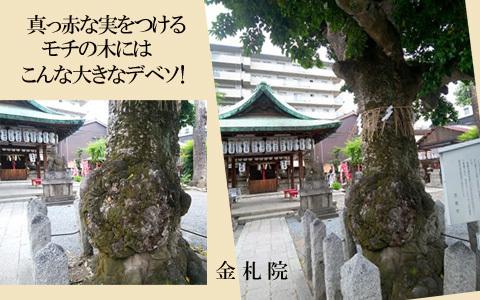 blog-19My22b.jpg