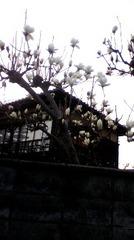 byki-blog0319B2.jpg