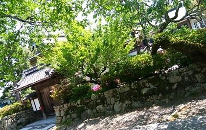 byki-blog0504Cf.jpg