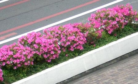 byki-blog0511C2.jpg