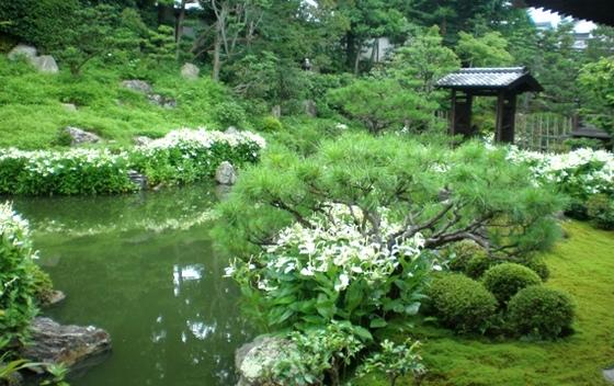 byki-blog0706C2.jpg