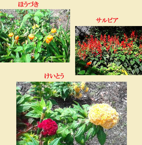 byki-blog0916C7.jpg