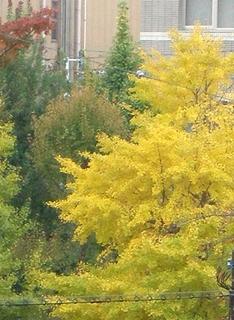 byki-blog1110A2.jpg