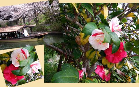 byki-blog20Mar11a.jpg