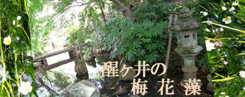byki-sannsaku819top.jpg